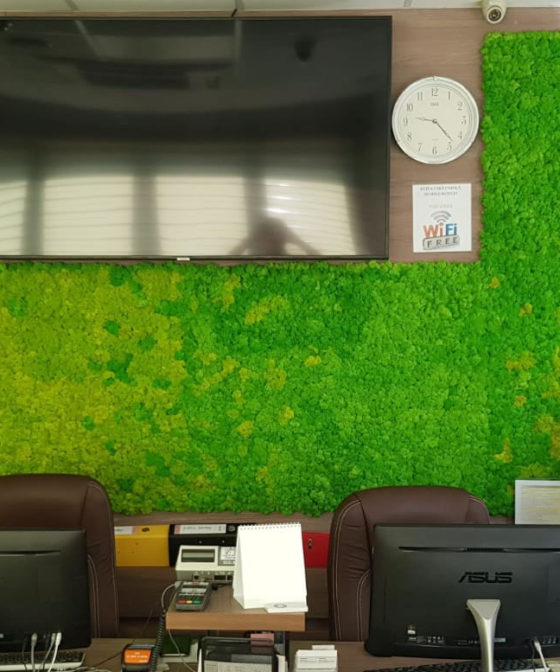 Panouri fixe din licheni pentru birou