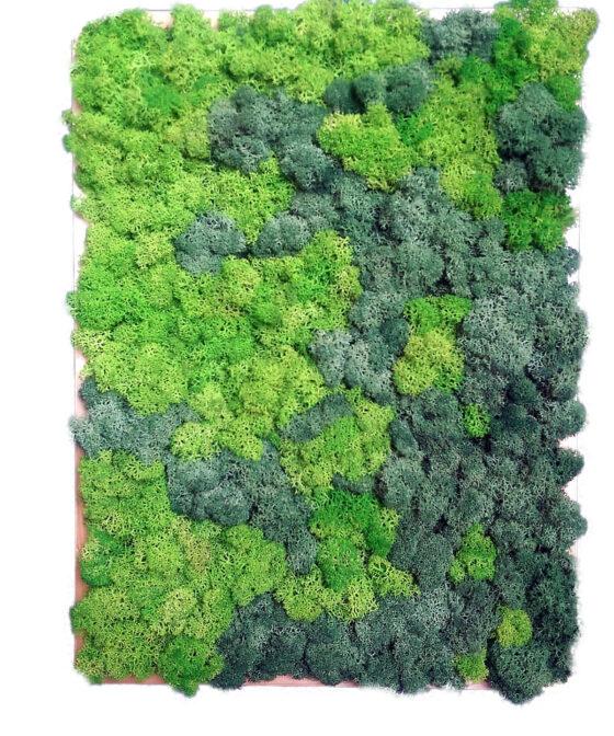 Diffusion - Decoraţiuni pentru casă din muşchi şi licheni naturali