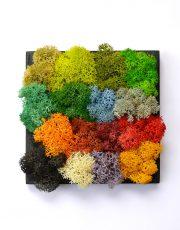 Paleta de culori Mossai