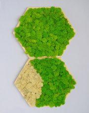 Hexagon Mossai Play - Decoraţiune tablou din licheni naturali