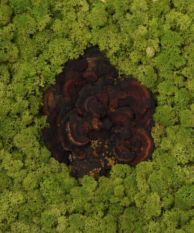 Fragment de pădure