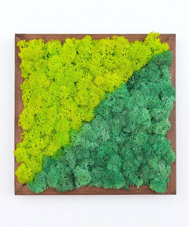 Diagonal - Decoraţiune tablou din licheni naturali