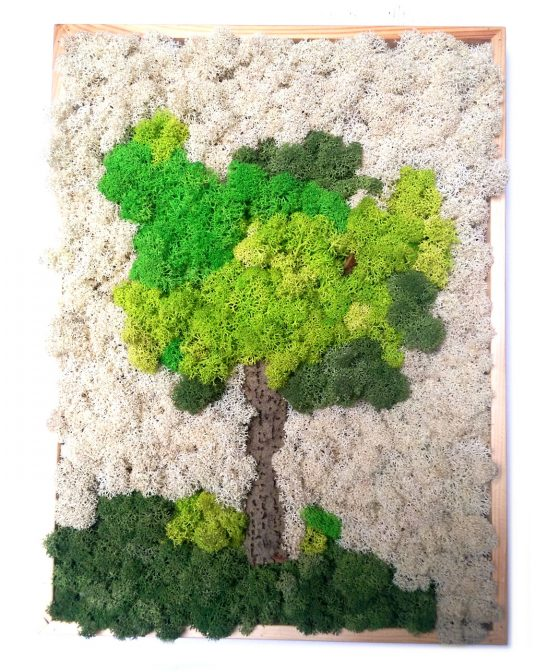 Mossai • Pyramid - Decoraţiune tablou din licheni naturali