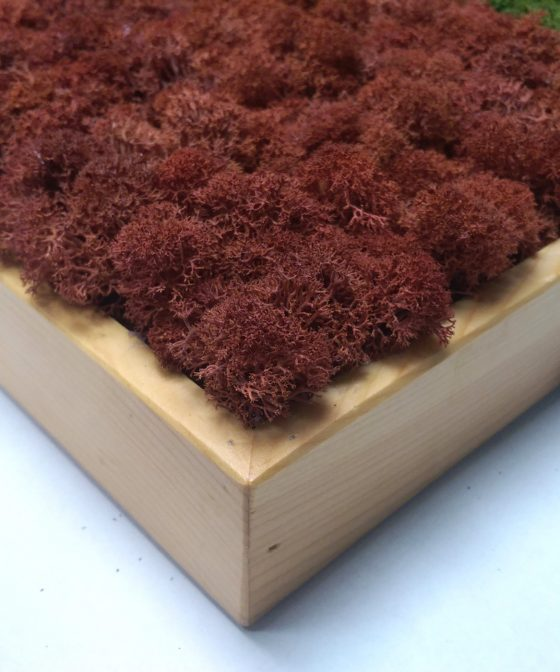 Mossai • Zoom - Decoraţiuni pentru casă din muşchi şi licheni naturali